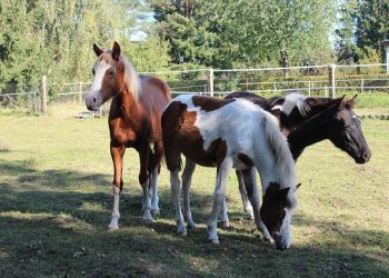 horse-980495_640